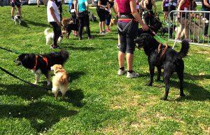 Cani'trail le 8 septembre à Mont-près-Chambord (41)