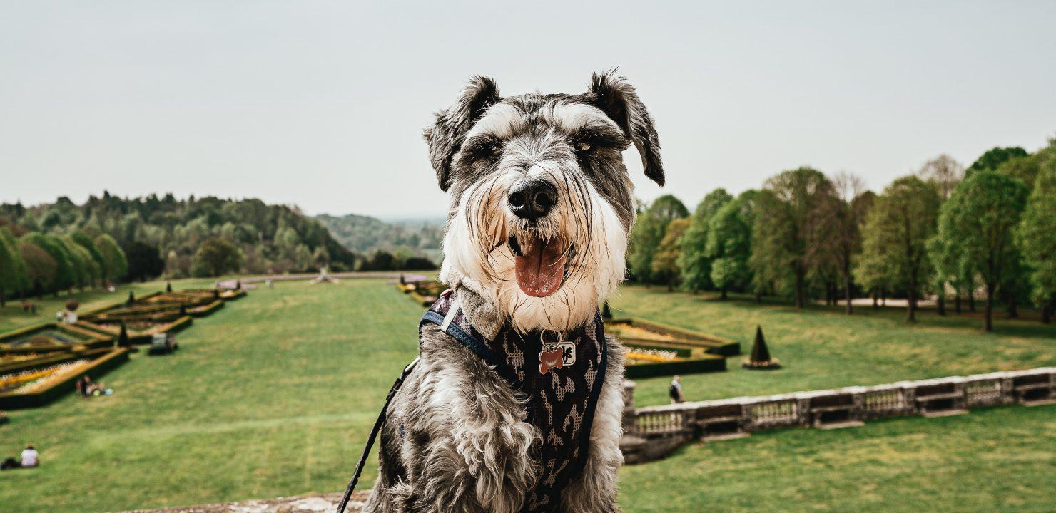 Un lien qui a du chien pour visiter le Val de Loire